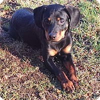 Adopt A Pet :: MILO - EDEN PRAIRIE, MN
