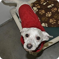 Adopt A Pet :: Bernie - Meridian, ID
