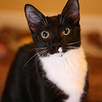 Adopt A Pet :: Peter (Nelson Foster) - Olive Branch, MS