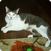 Adopt A Pet :: Rocko - Cleveland, OH
