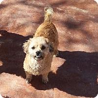 Adopt A Pet :: Rumour - Dothan, AL
