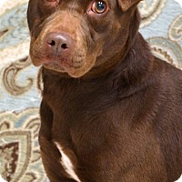 Adopt A Pet :: Faith - Newnan City, GA