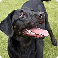 Adopt A Pet :: Kenna 256-17 - Cumming, GA