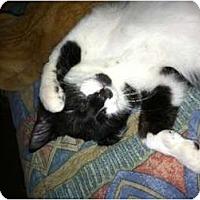 Adopt A Pet :: Marlowe - lake elsinore, CA