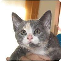 Adopt A Pet :: Buttercup - Port Republic, MD