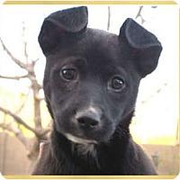 Adopt A Pet :: Haven - Scottsdale, AZ