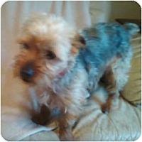 Adopt A Pet :: Maxwell - Duluth, GA