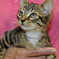 Adopt A Pet :: SEGOVIA - League City, TX