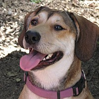 Adopt A Pet :: Sally Ann - Destrehan, LA