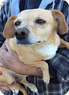 Dachshund Mix Dog for adoption in Simi Valley, California - Sandy