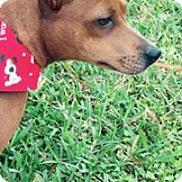 Adopt A Pet :: Sunshine - Jupiter, FL