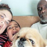 Adopt A Pet :: Pug - Plain City, OH