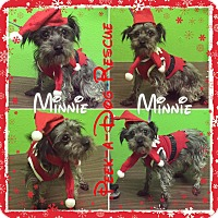 Adopt A Pet :: Minnie - South Gate, CA