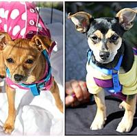 Adopt A Pet :: Aubrey and Ashton - Ft. Lauderdale, FL