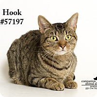 Domestic Shorthair Cat for adoption in Baton Rouge, Louisiana - Hook