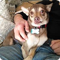 Adopt A Pet :: FREDDY!! - Mastic Beach, NY