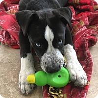 Adopt A Pet :: Dakota - Cerritos, CA