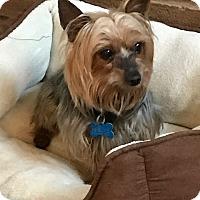 Adopt A Pet :: Maverick - San Diego, CA