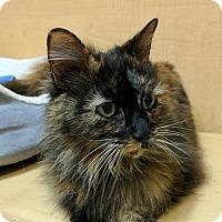Adopt A Pet :: Mati - El Cajon, CA