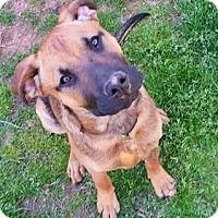 Adopt A Pet :: Chapper meet me 3/24 - Manchester, CT