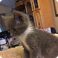 Adopt A Pet :: Chloé - Modesto, CA