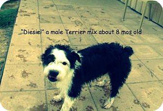 Terrier (Unknown Type, Medium) Mix Dog for adoption in Gadsden, Alabama - Diesel