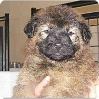 Adopt A Pet :: Brooke - Alexandria, VA