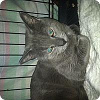 Adopt A Pet :: Trapper - Clay, NY