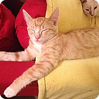 Adopt A Pet :: Hobbes - Beverly Hills, CA