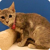 Adopt A Pet :: Ferrari - The Colony, TX