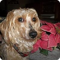 Adopt A Pet :: Bam - Sheridan, OR