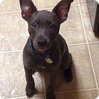 Adopt A Pet :: Anja - Knoxville, TN