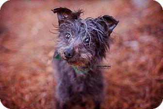 Chinese Crested Mix Dog for adoption in Atlanta, Georgia - Jammi