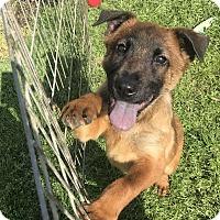 Adopt A Pet :: Simon - Jackson, MS
