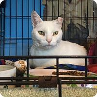 Adopt A Pet :: Aurora - LaGrange, KY