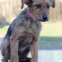 Adopt A Pet :: Shirley - Waldorf, MD