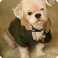 Adopt A Pet :: Gabriel - Tallahassee, FL