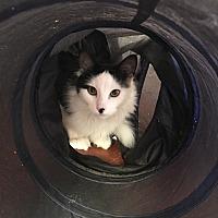 Adopt A Pet :: JoJo - Prescott, AZ