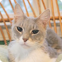 Adopt A Pet :: Egyptian Princess Nefertiti - Fairfax, VA