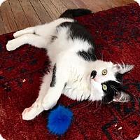 Adopt A Pet :: Koroma - Philadelphia, PA
