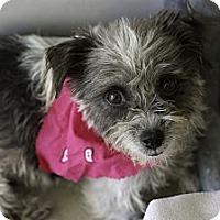 Adopt A Pet :: Heidi - Calgary, AB