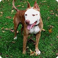 Adopt A Pet :: Riley - Blue Ridge, GA