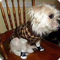 Adopt A Pet :: Gumdrop ~ Adoption Pending - Youngstown, OH