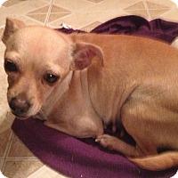 Adopt A Pet :: Rosalie - Gilbert, AZ