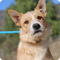 Adopt A Pet :: McDuff - Fillmore, CA