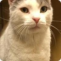 Adopt A Pet :: Patches - Jackson, NJ