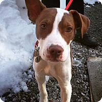 Adopt A Pet :: Jesse James - Berwick, ME