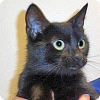 Adopt A Pet :: Suzette - Wildomar, CA