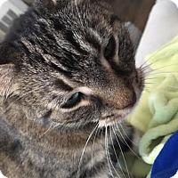 Adopt A Pet :: Inka - Herndon, VA