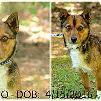 Adopt A Pet :: Rodeo - Siler City, NC